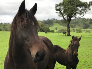 Seeing With Fresh Eyes, Pamela Cook, @PamelaCookAU, equine therapy