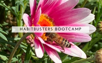 Spring Habit-Buster Boot Camp – Who's In?